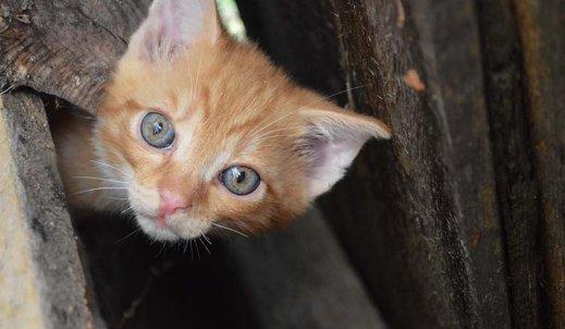 Piękno rudego kota